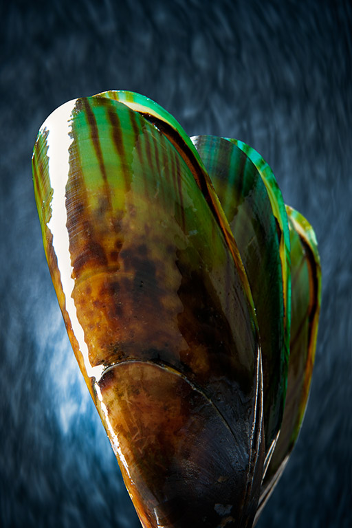 GREEN-LIPPED-MUSSELS-FINAL-01
